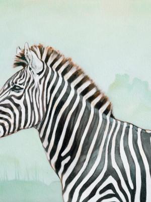 R Drage Zebra