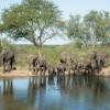Elephants, Kruger Park