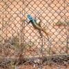 Lizard, Kruger Park